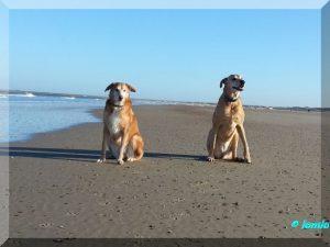 Jan 2015 Timmy und Nela Strand