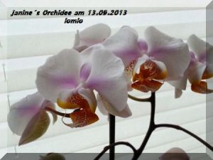 Janines Orchidee  am 13.09.2013