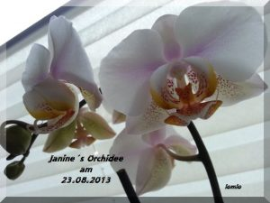 Janines_Orchidee_23.08.2013