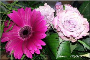 März Blumen für iomio von iomio
