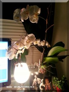 Orchidee 02.08.2013