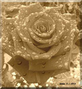 Rose janine nov 2013