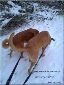 Timmy und Nela im Schnee 20 12 2013