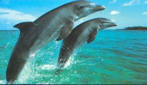 dolphin_210908